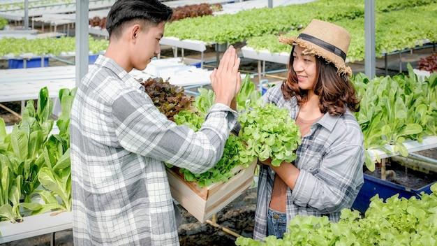 농부는 야채 유기농 샐러드, 고객을 위해 수경 농장에서 상추를 수확하고 하이파이브를 만듭니다.