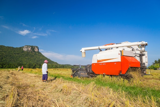 Farmer harvesting by combine harvester