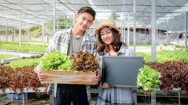 Farmer harvesting lettuce from hydroponic farm for customers