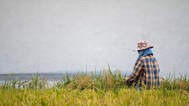 タイ、パッタルン、パクプラの湖のほとりで稲刈りをしている農家