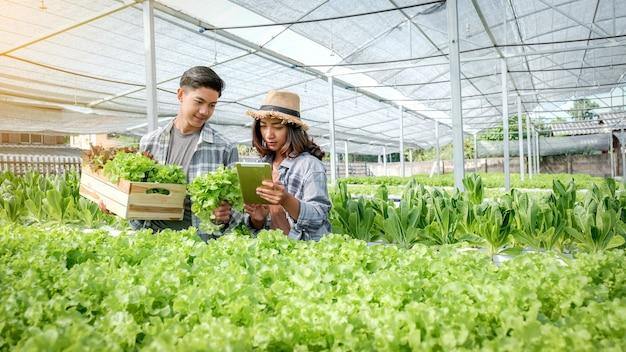 고객을 위해 수경 농장에서 야채 유기농 샐러드, 양상추를 수확하는 농부