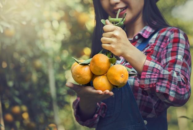 Farmer hold fresh oranges on citrus tree in the garden.