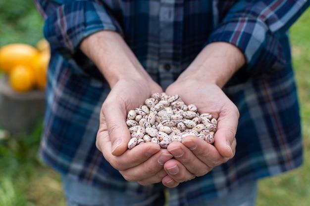 흰 콩의 신선한 수확을 들고 농부