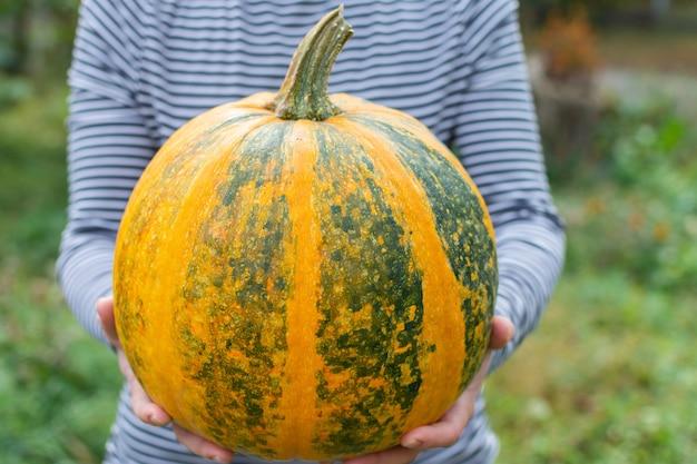 Фермер держит созревшую в апельсине тыкву, свежие органические овощи из сада