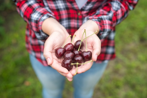 Farmer holding cherry fruit in his hands in orchard