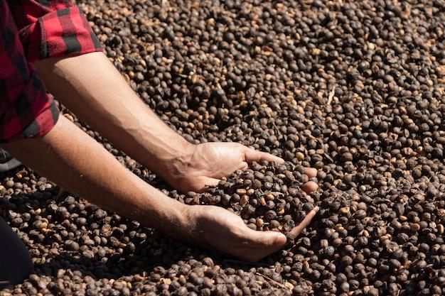 乾燥したコーヒー豆を持っている農夫
