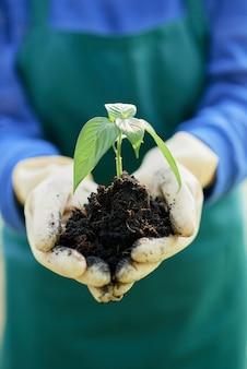 Farmer holding seedling