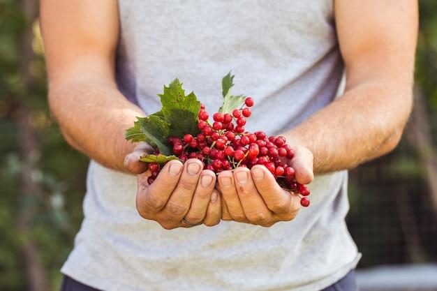 농부가 가막살 나무속 열매를 보유