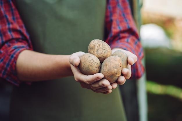 エプロンの農家は自家製ジャガイモの塊茎を保持しています