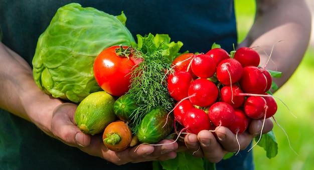 Фермер в синей одежде держит в руках спелые овощи