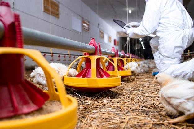 현대 가금류 농장에서 닭 먹이 시스템을 제어하는 살균된 옷을 입은 농부.