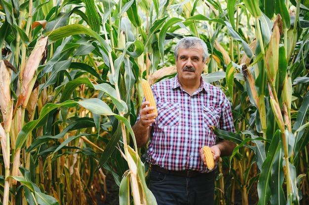 Фермер в поле проверяет растения кукурузы в солнечный летний день, концепция сельского хозяйства и производства продуктов питания