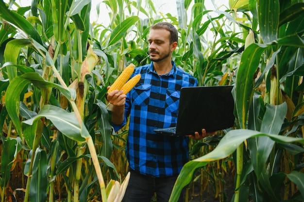 화창한 여름날 옥수수 식물을 확인하는 들판의 농부, 농업 및 식품 생산 개념