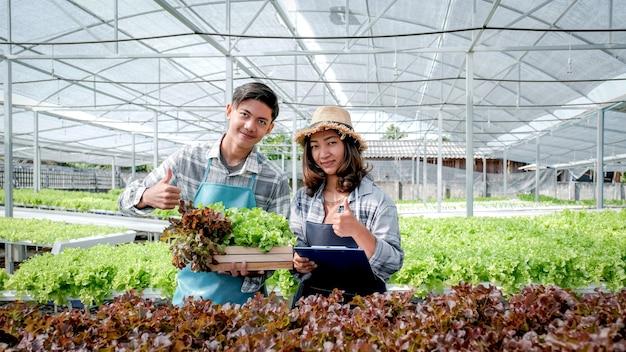 농부는 수경 농장에서 야채 유기농 샐러드와 양상추의 품질을 검사합니다