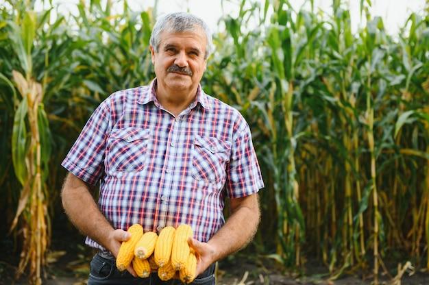 Farmer inspecting corn cob at his field