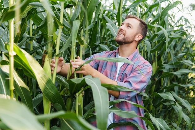 Фермер осматривает кукурузное поле и смотрит в сторону