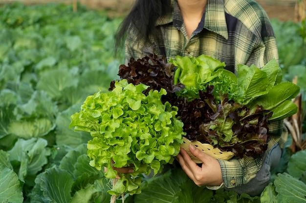 농부는 야채 녹색과 붉은 오크를 들고