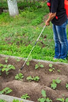 농부는 정원에 있는 압력 분무기로 가지 식물을 곰팡이 질병이나 해충으로부터 보호하고 있습니다