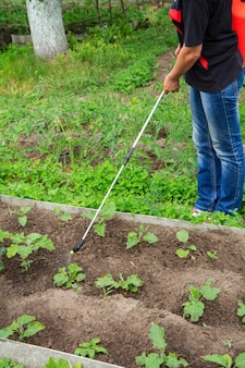 Farmer is protecting eggplant plants from fungal disease or vermin with pressure sprayer in the garden
