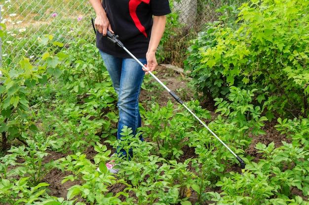 농부는 정원에 있는 압력 분무기로 곰팡이 질병이나 해충으로부터 감자 식물을 보호하고 있습니다