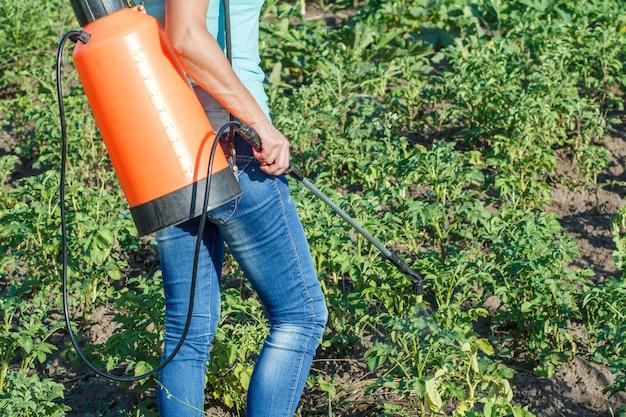 농부는 압력 분무기로 곰팡이 질병이나 해충으로부터 감자 식물을 보호하고 있습니다.