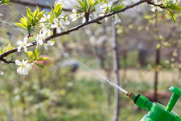 농부는 흰색 꽃이 있는 펌프 나무 가지에 물 용액을 뿌리고 있습니다. 봄철에 과수를 곰팡이병이나 해충으로부터 보호합니다. 압력 분무기에 선택적 초점