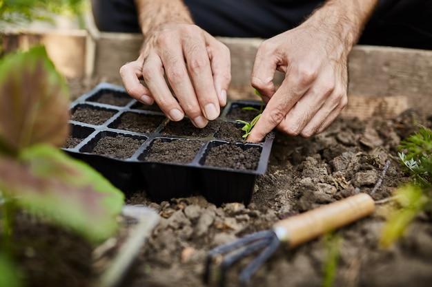 農家の生活。菜園でパセリの苗を植える庭師。庭で働いて、種をまく、植物に水をまく男の手のクローズアップ。