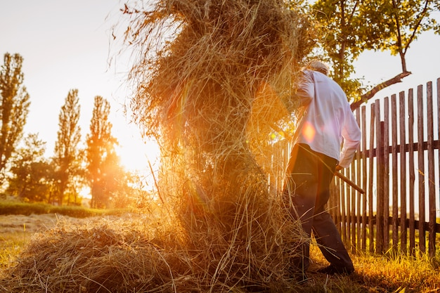 Farmer man gathers hay with pitchfork at sunset in countryside