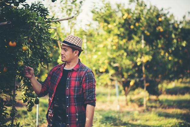 オレンジの木のフィールドでオレンジを収穫する農夫の男