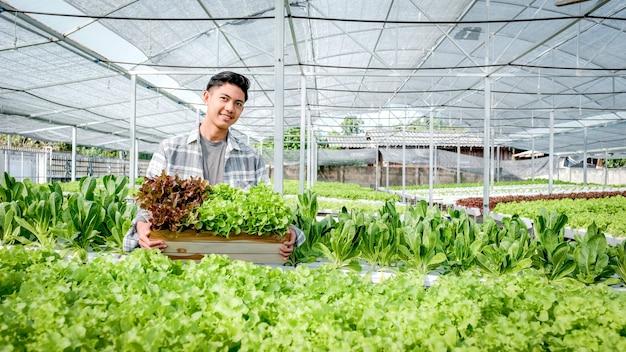 Фермер собирает салат на гидропонной ферме