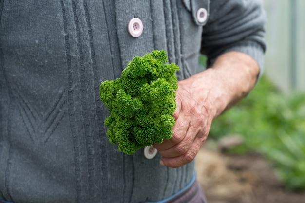 背景の屋外の庭でパセリの茎を手に持っている農夫の男