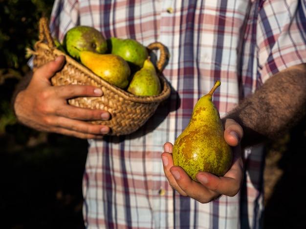彼の手で梨を提供している果物の果樹園で農家の男が果物に焦点を当てる