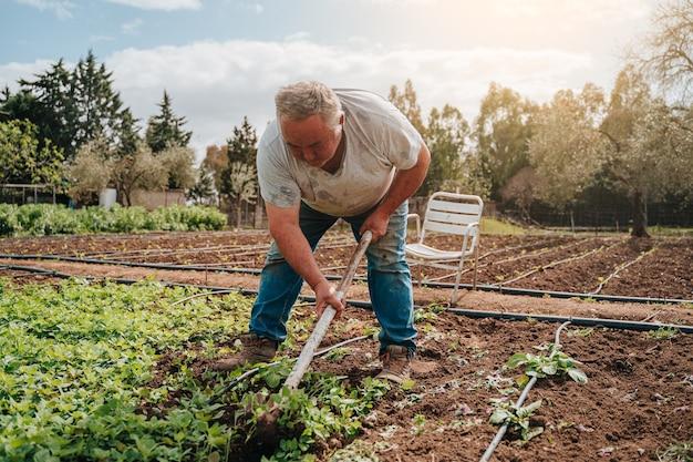 파는 감자를 심기 위해 괭이로 땅을 청소하는 50 대 농부 남자