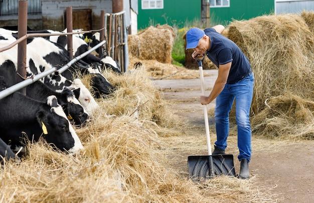 Фермер человек работает лопатой на ферме коров