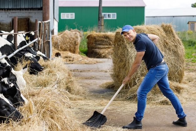 牛の農場でシャベルを実行している農夫