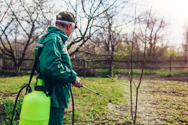 Farmer man spraying tree with manual pesticide sprayer against insects in spring garden