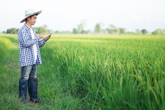 緑の稲作農家でスマートフォンを使用している農家の男性。デザイン用のコピースペースのある画像。