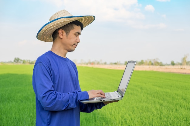 Farmer man wear hat using laptop computer standing on green rice field