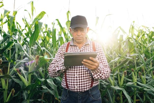 タブレットでトウモロコシの収穫を監視している農家デジタルタブレットを持った年配の農家が畑で働いている