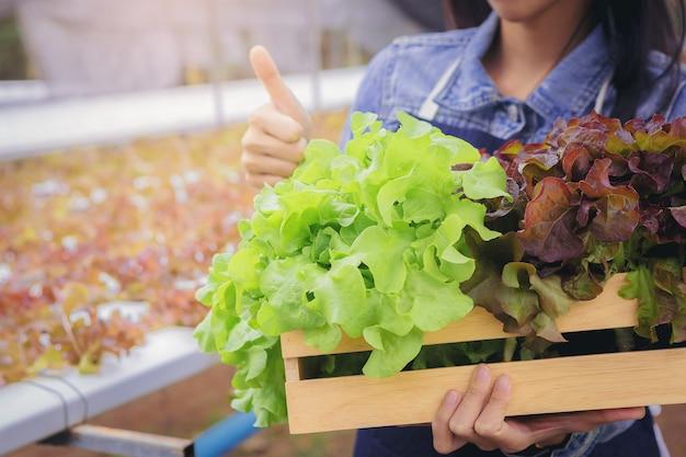 온실의 농부 주인 수경 재배 야채 농장은 바구니에 녹색 유기농 야채를 모아서 선물합니다