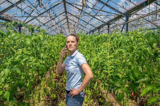 トマトを栽培している有機農場の温室で電話をかける農家