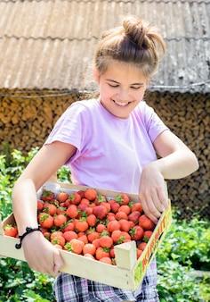 농부는 덤불에서 딸기를 선택합니다.
