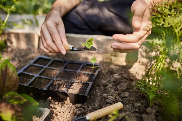 정원에서 꽃의 어린 묘목을 심는 농부. 정원 도구로 토양에 넣을 손에 작은 꽃 새싹을 들고 남자