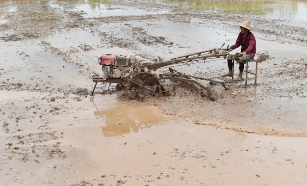 Фермер вспахивает на рисовом поле готовят саженец риса под солнечным светом