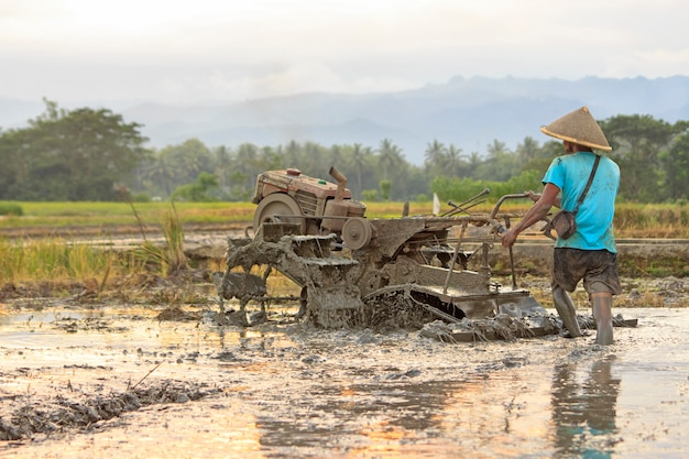 Farmer plowing a rice field in yogyakarta at the afternoon, indonesia.