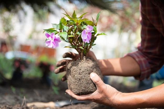 農業用の花を準備する農家