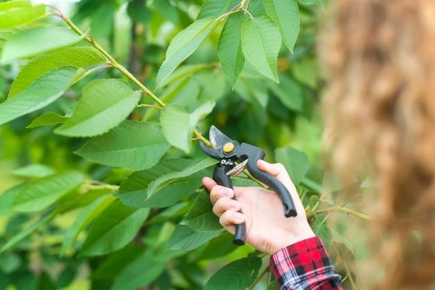 Фермер обрезка ветвей фруктовых деревьев в саду