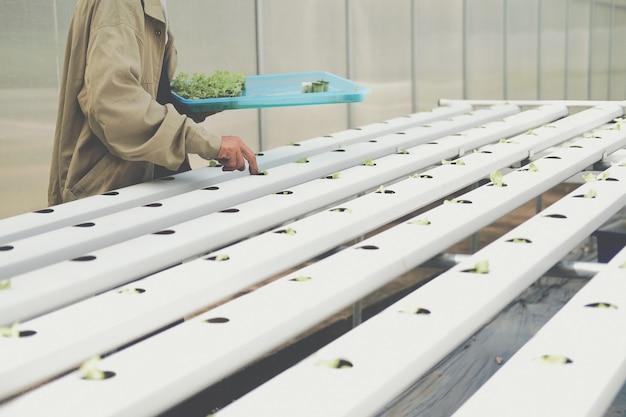植物保育園の水耕レールパイプの湿ったスポンジに水耕野菜の芽を置く農夫
