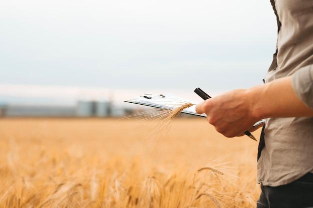 Рука фермера, проверяющая прогресс и развитие поля пшеницы. а