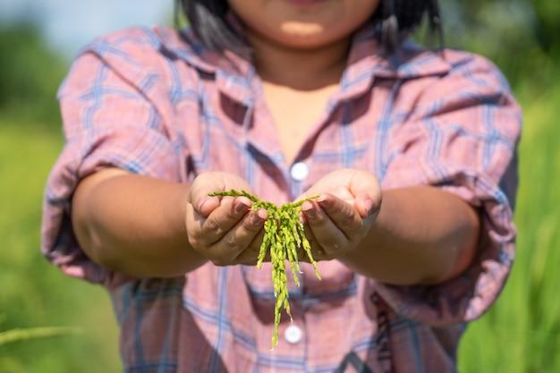 タイ農場で田んぼを持っている農家の手。